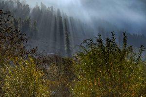 جنگل هاي منطقه پاهالكام