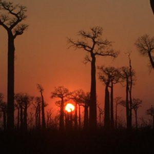 طبیعت مداگاسکار