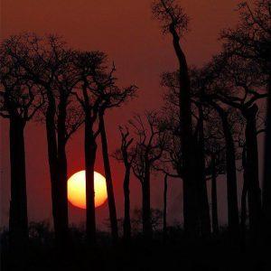 پوشش گیاهی ماداگاسکار